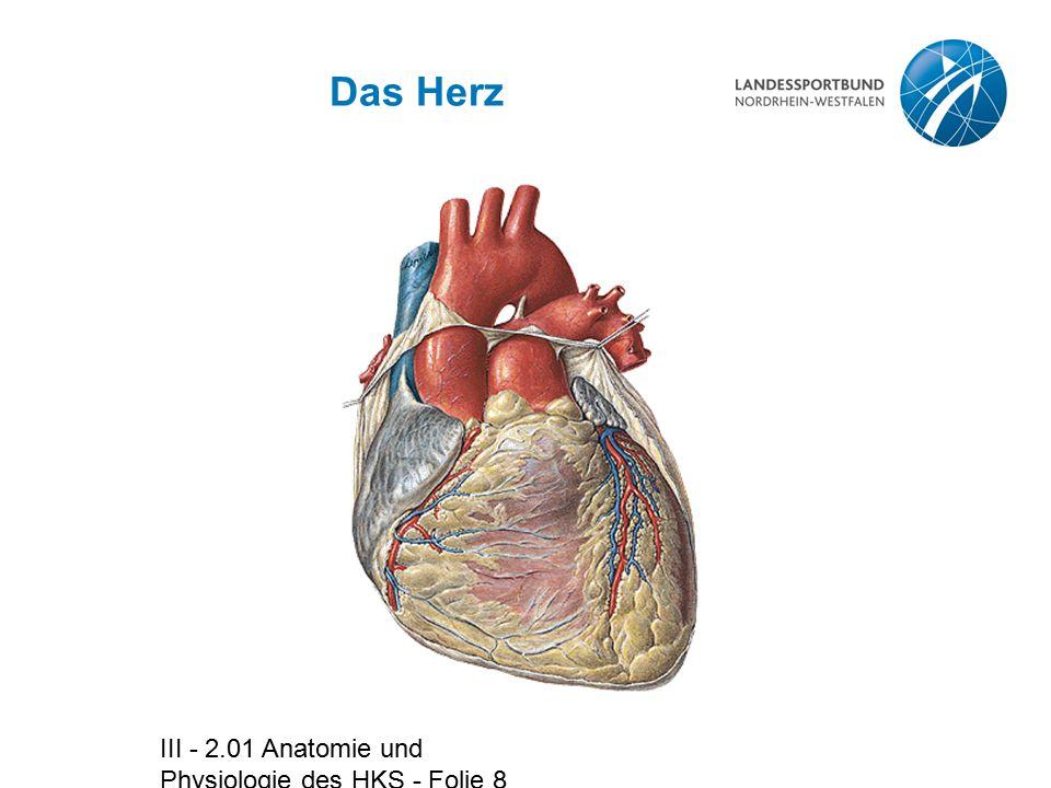 Das Herz III - 2.01 Anatomie und Physiologie des HKS - Folie 8