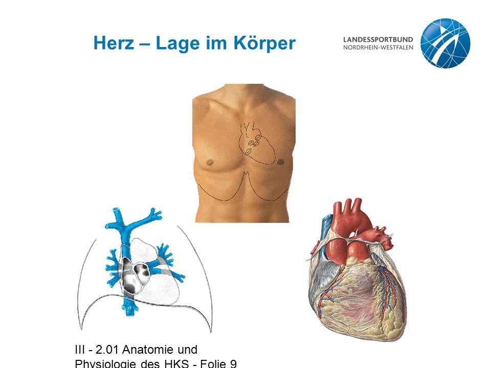 Herz – Lage im Körper III - 2.01 Anatomie und Physiologie des HKS - Folie 9