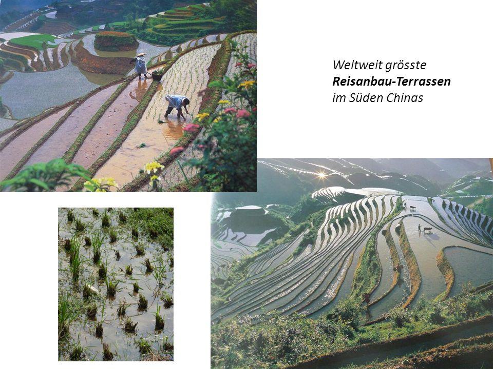 Weltweit grösste Reisanbau-Terrassen im Süden Chinas