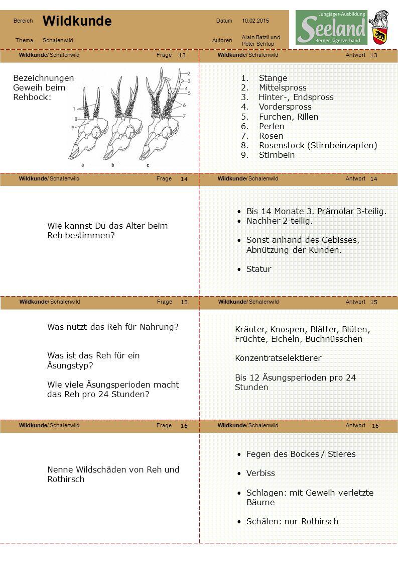 Bezeichnungen Geweih beim Rehbock: Stange Mittelspross