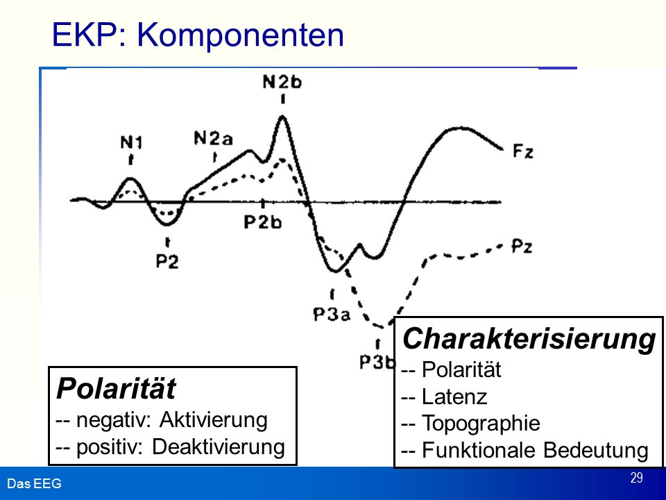 EKP: Komponenten Charakterisierung Polarität - Polarität - Latenz