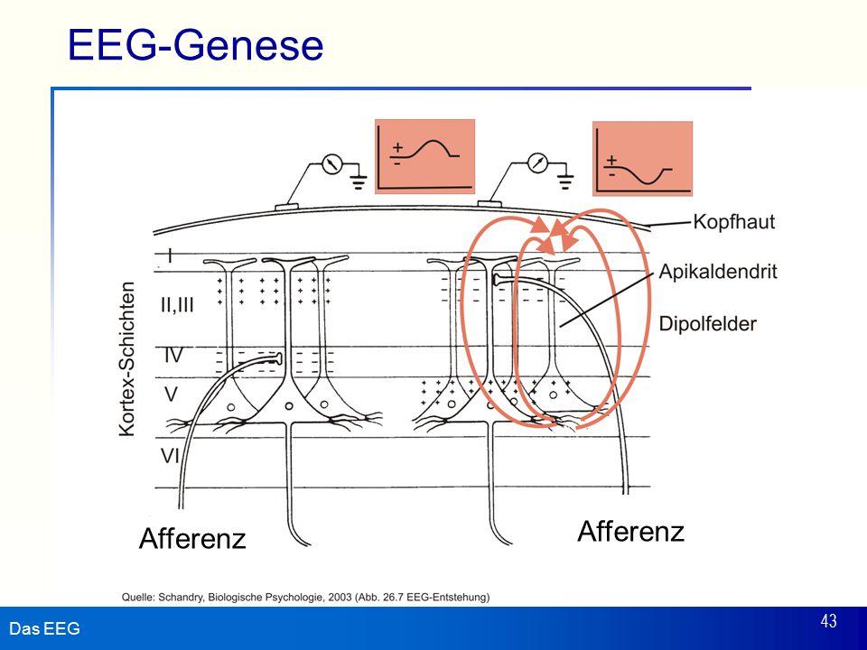 EEG-Genese Afferenz