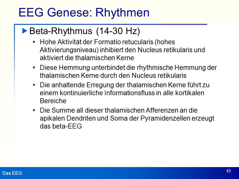 EEG Genese: Rhythmen Beta-Rhythmus (14-30 Hz)