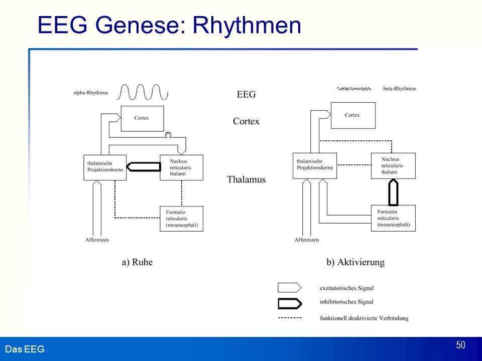 EEG Genese: Rhythmen