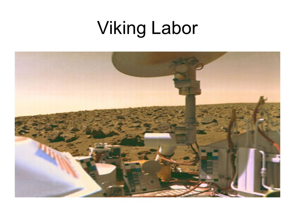 Viking Labor