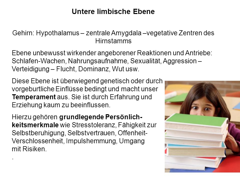 Untere limbische Ebene
