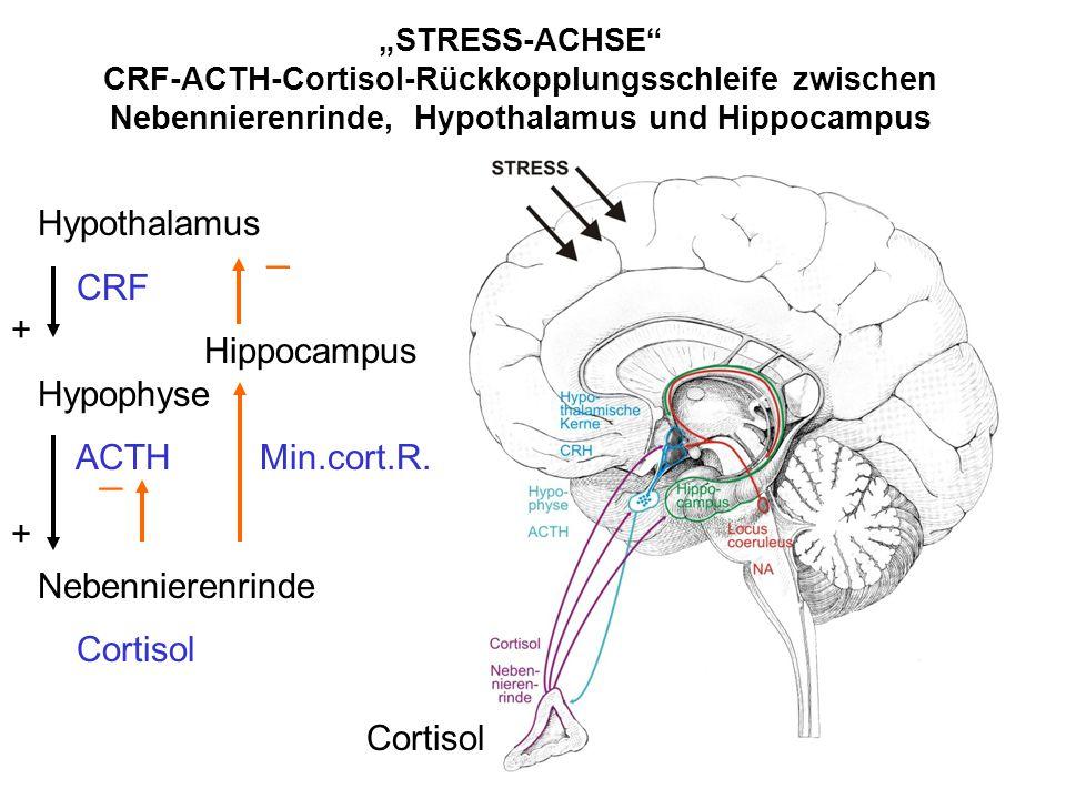 _ _ Hypothalamus CRF Hippocampus Hypophyse ACTH Min.cort.R.