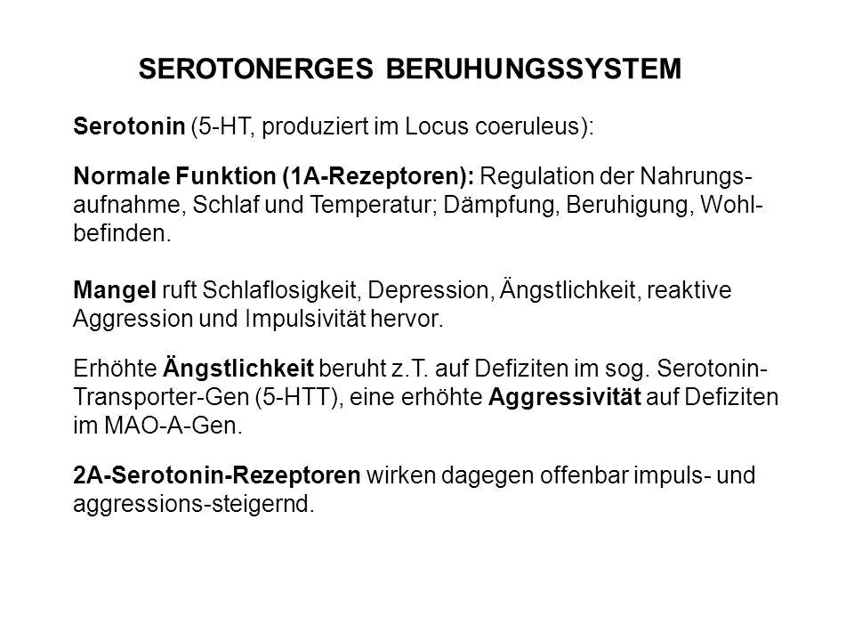 SEROTONERGES BERUHUNGSSYSTEM