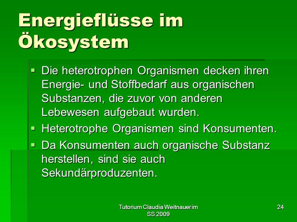 Energieflüsse im Ökosystem