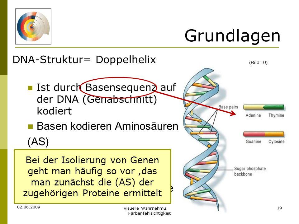 Grundlagen Basen kodieren Aminosäuren (AS) Bei der Isolierung der Gene