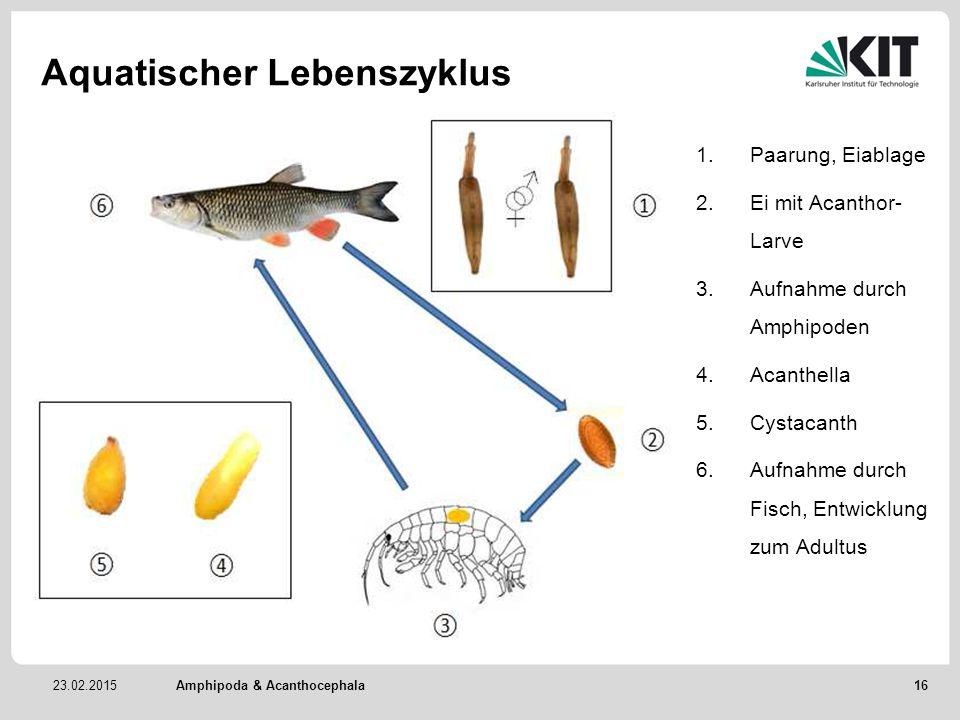 Aquatischer Lebenszyklus
