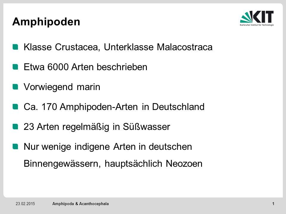 Amphipoden Klasse Crustacea, Unterklasse Malacostraca