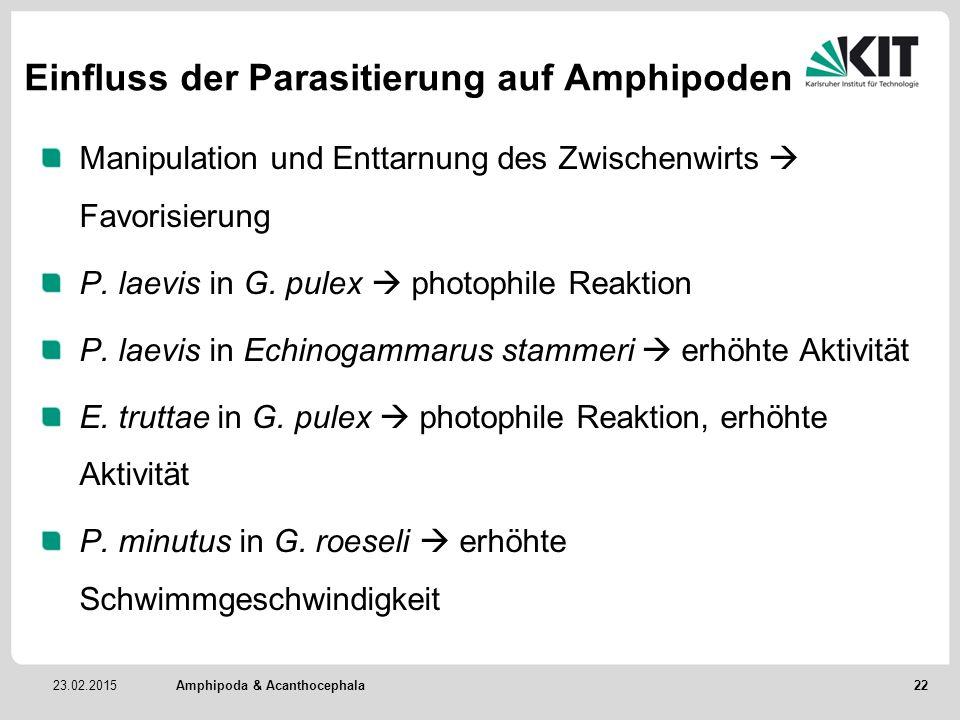 Einfluss der Parasitierung auf Amphipoden