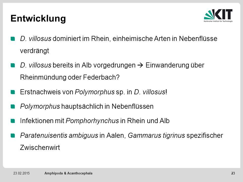 Entwicklung D. villosus dominiert im Rhein, einheimische Arten in Nebenflüsse verdrängt.