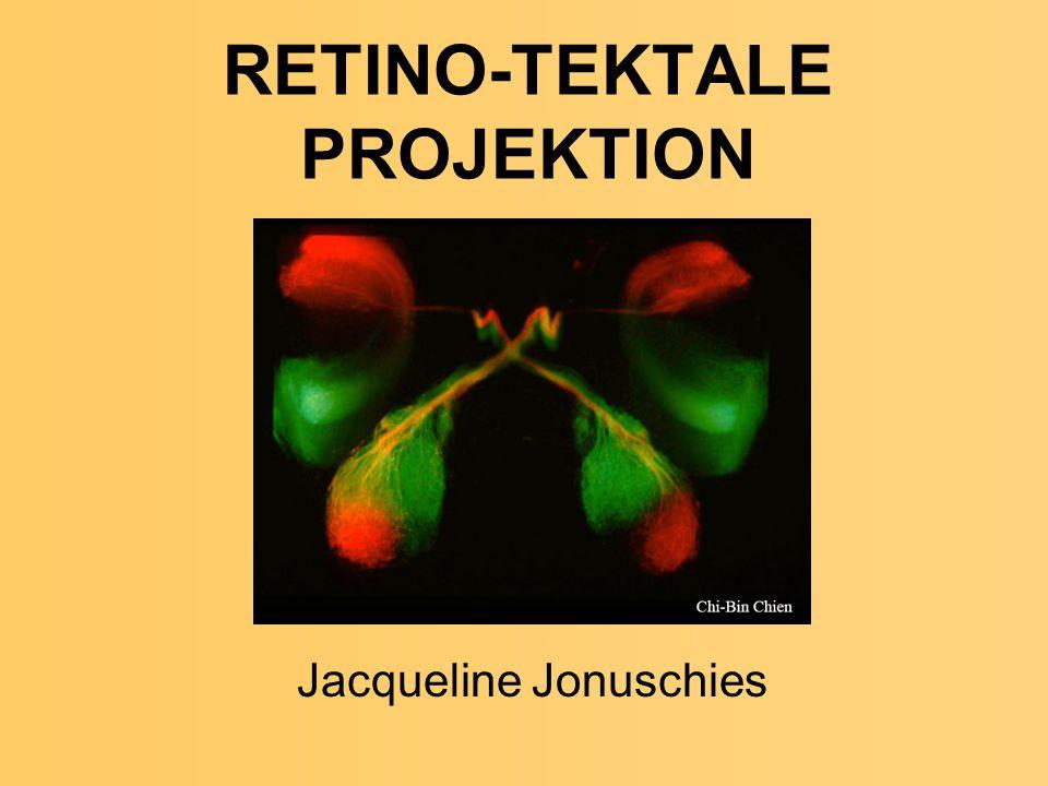 RETINO-TEKTALE PROJEKTION