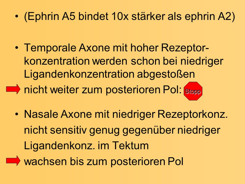 (Ephrin A5 bindet 10x stärker als ephrin A2)