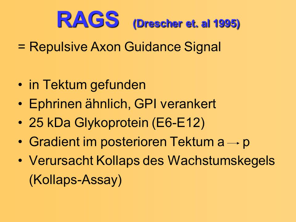 RAGS (Drescher et. al 1995) = Repulsive Axon Guidance Signal
