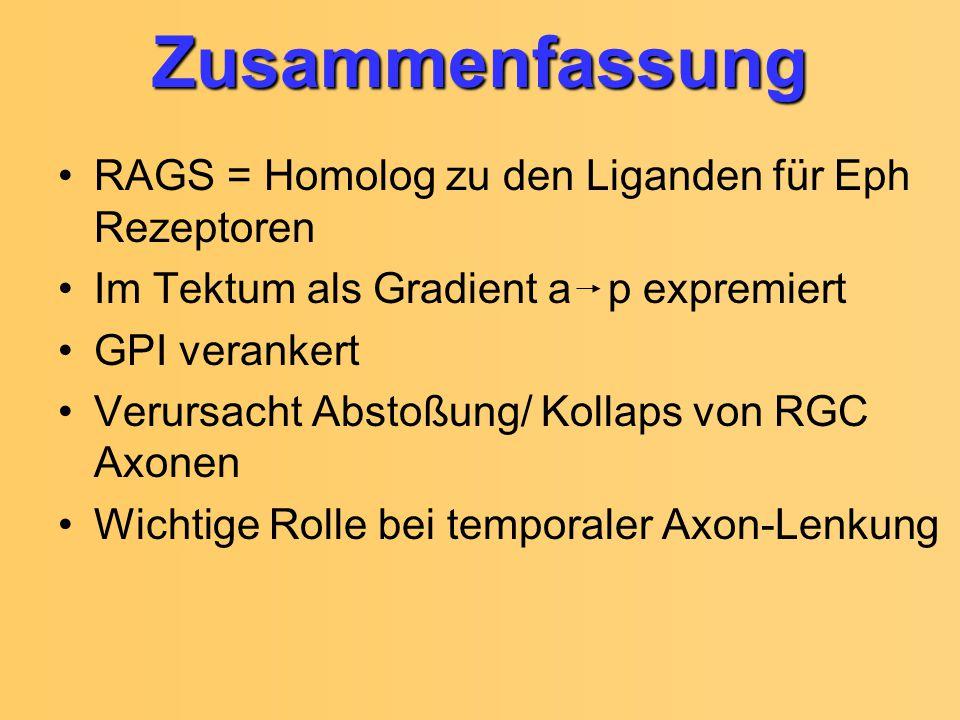 Zusammenfassung RAGS = Homolog zu den Liganden für Eph Rezeptoren