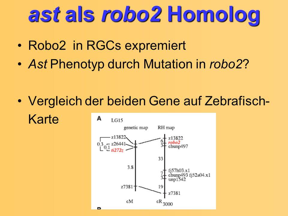 ast als robo2 Homolog Robo2 in RGCs expremiert