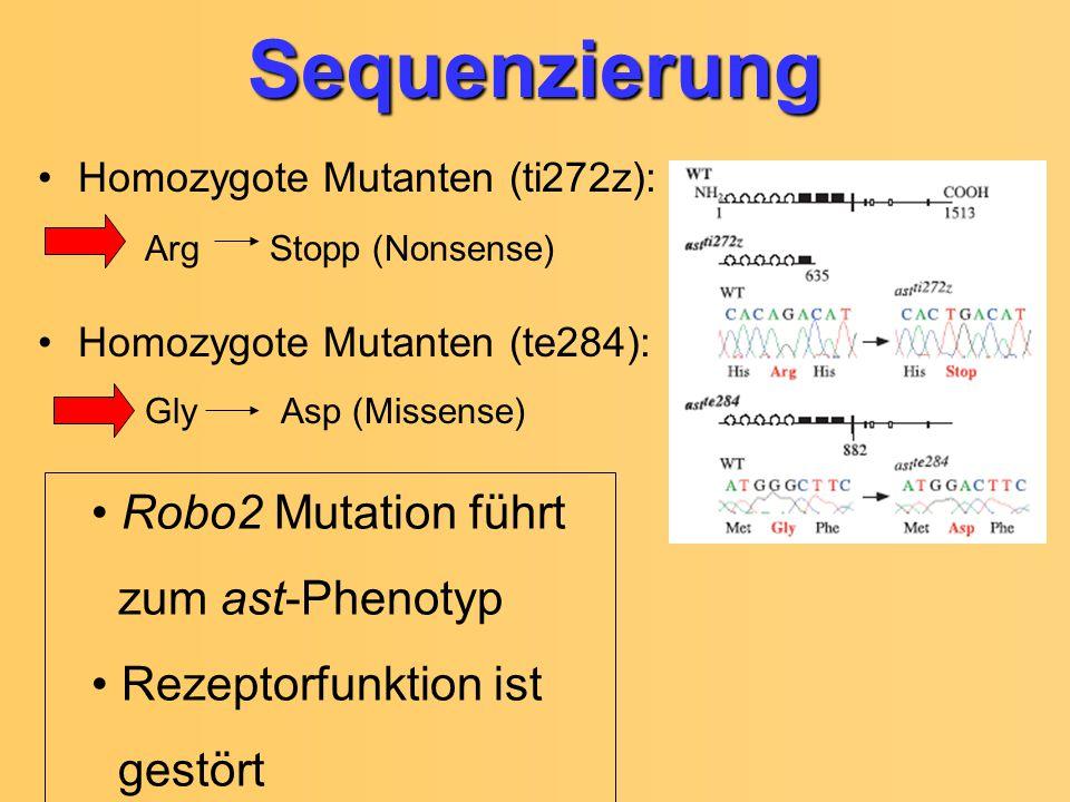 Sequenzierung Arg Stopp (Nonsense) Gly Asp (Missense)