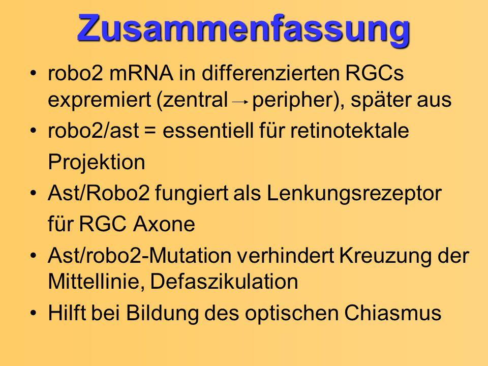 Zusammenfassung robo2 mRNA in differenzierten RGCs expremiert (zentral peripher), später aus. robo2/ast = essentiell für retinotektale.