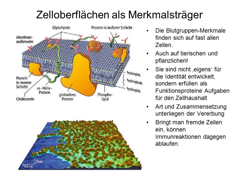 Zelloberflächen als Merkmalsträger