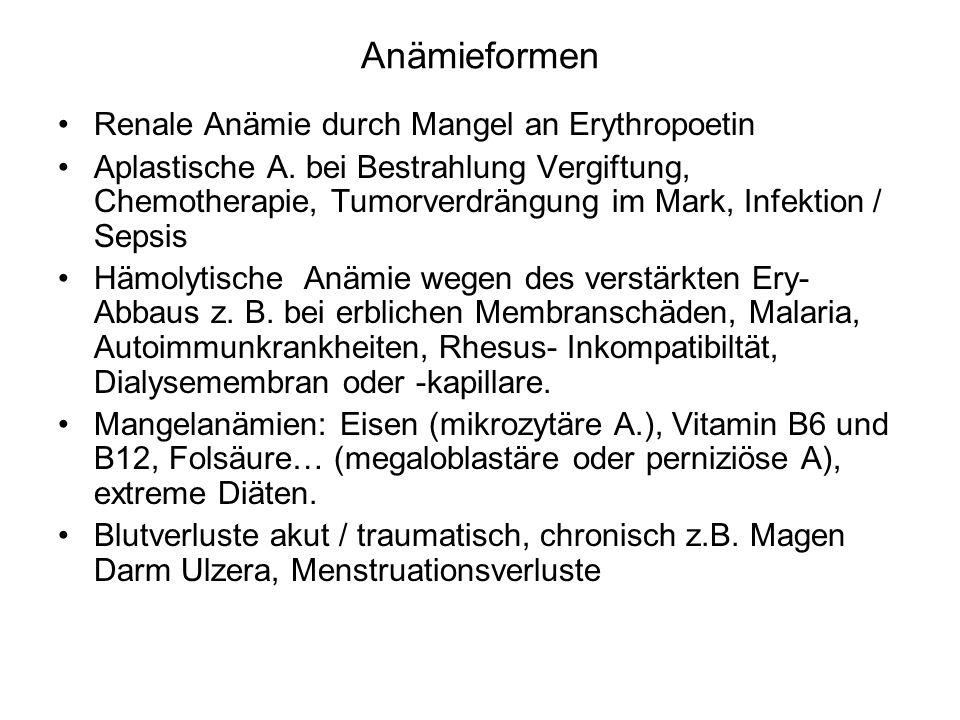 Anämieformen Renale Anämie durch Mangel an Erythropoetin