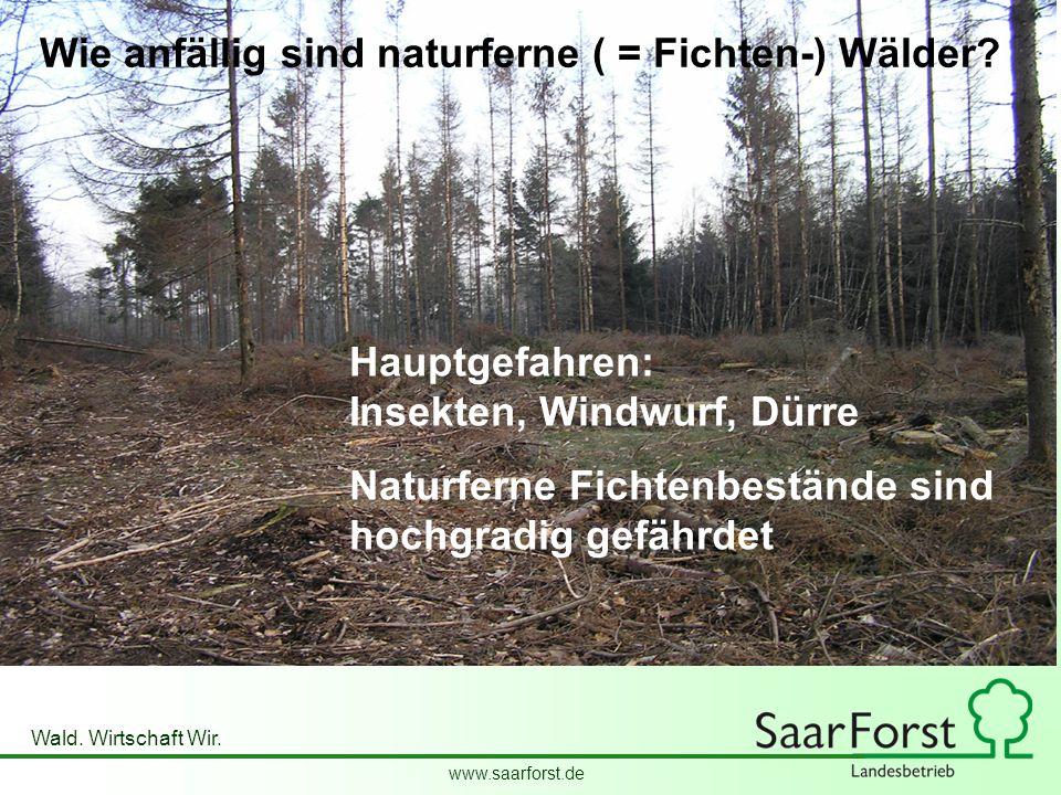 Wie anfällig sind naturferne ( = Fichten-) Wälder