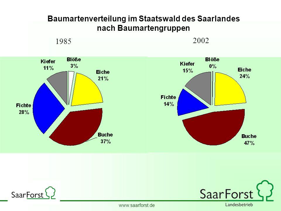 Baumartenverteilung im Staatswald des Saarlandes nach Baumartengruppen