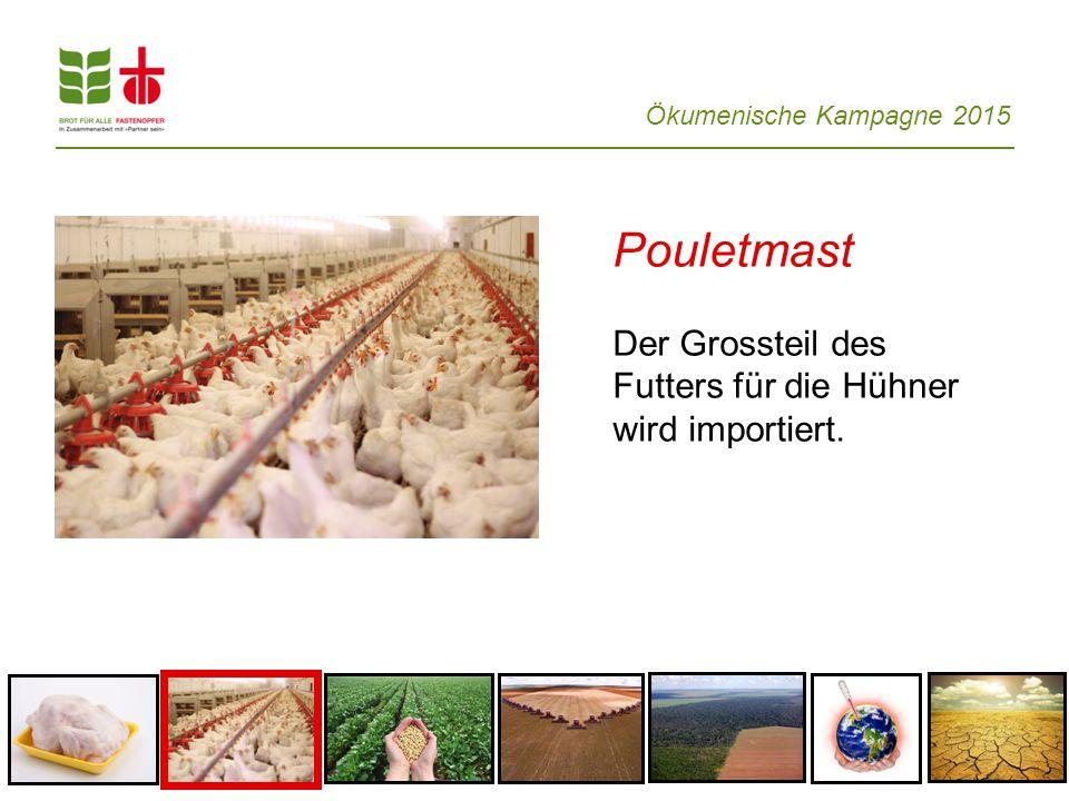 Pouletmast Der Grossteil des Futters für die Hühner wird importiert.