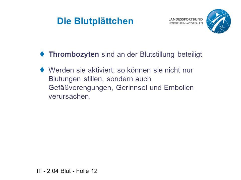 Die Blutplättchen Thrombozyten sind an der Blutstillung beteiligt