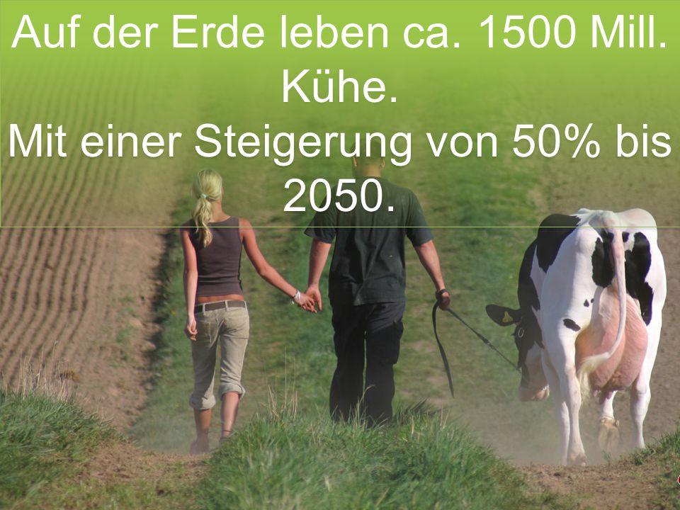 Auf der Erde leben ca. 1500 Mill. Kühe