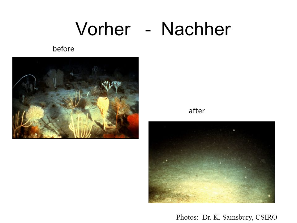 Vorher - Nachher before after Photos: Dr. K. Sainsbury, CSIRO