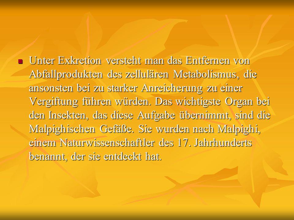 Unter Exkretion versteht man das Entfernen von Abfallprodukten des zellulären Metabolismus, die ansonsten bei zu starker Anreicherung zu einer Vergiftung führen würden.