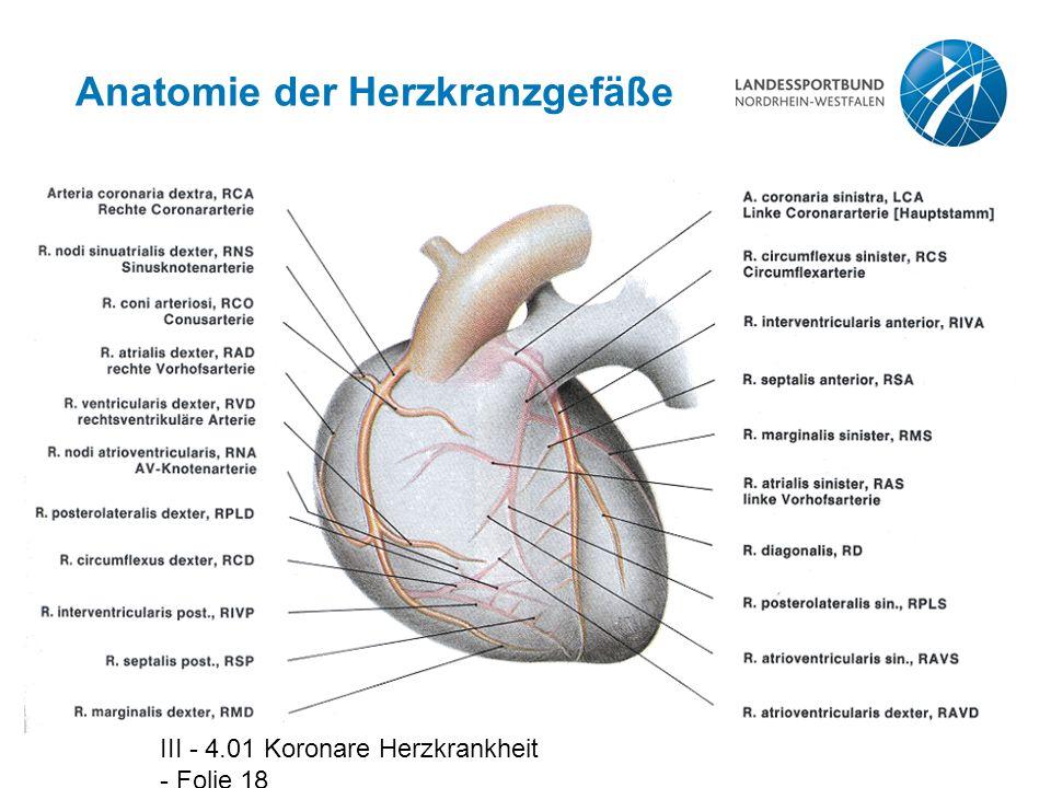 Atemberaubend Koronare Anatomie Und Physiologie Galerie ...