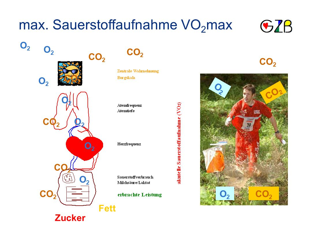 max. Sauerstoffaufnahme VO2max