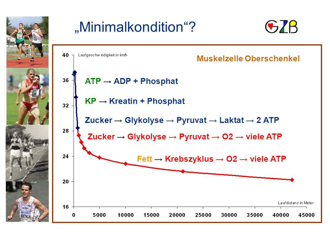 """""""Minimalkondition Muskelzelle Oberschenkel ATP → ADP + Phosphat"""