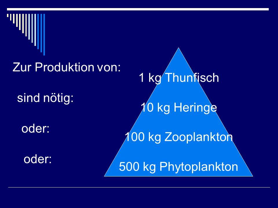 1 kg Thunfisch 10 kg Heringe. 100 kg Zooplankton. 500 kg Phytoplankton. Zur Produktion von: sind nötig: