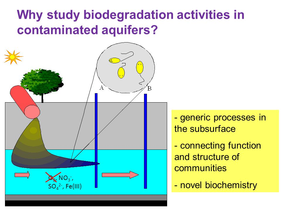 Why study biodegradation activities in contaminated aquifers