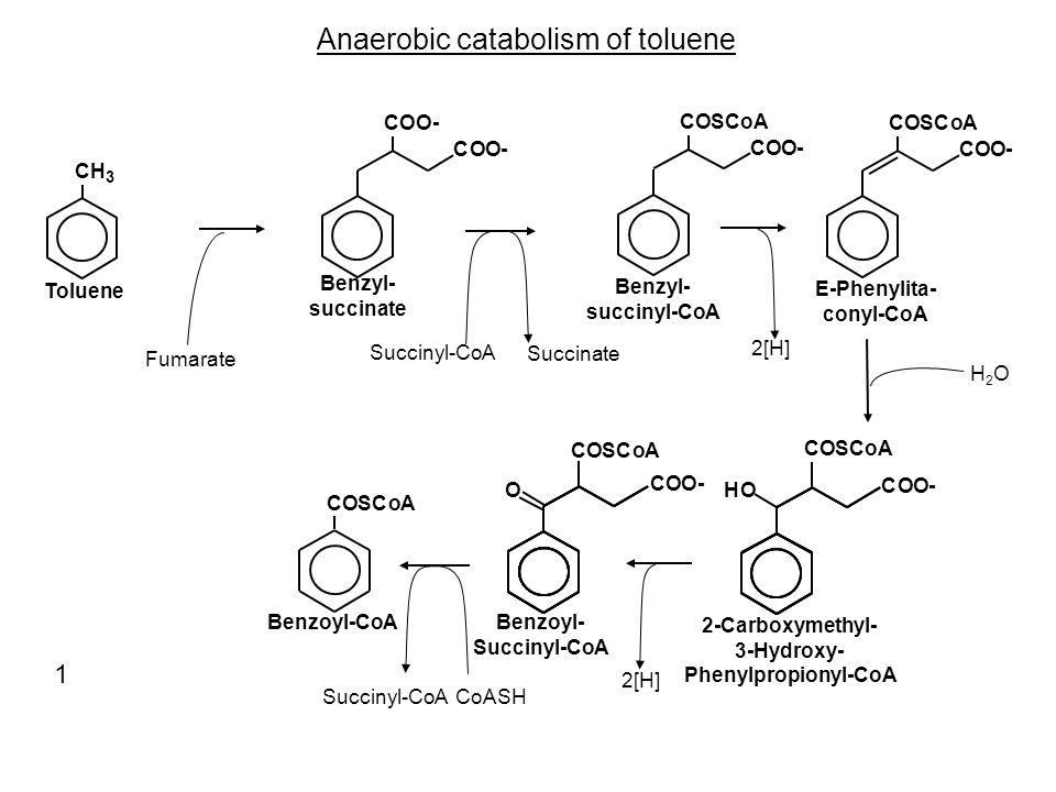 Anaerobic catabolism of toluene