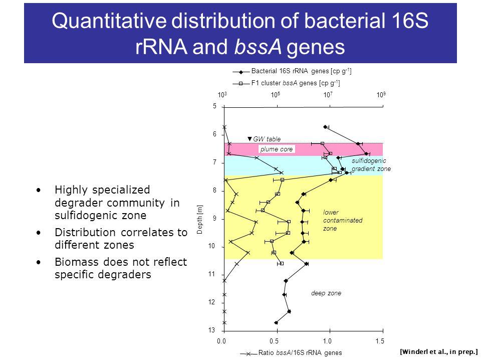 Quantitative distribution of bacterial 16S rRNA and bssA genes