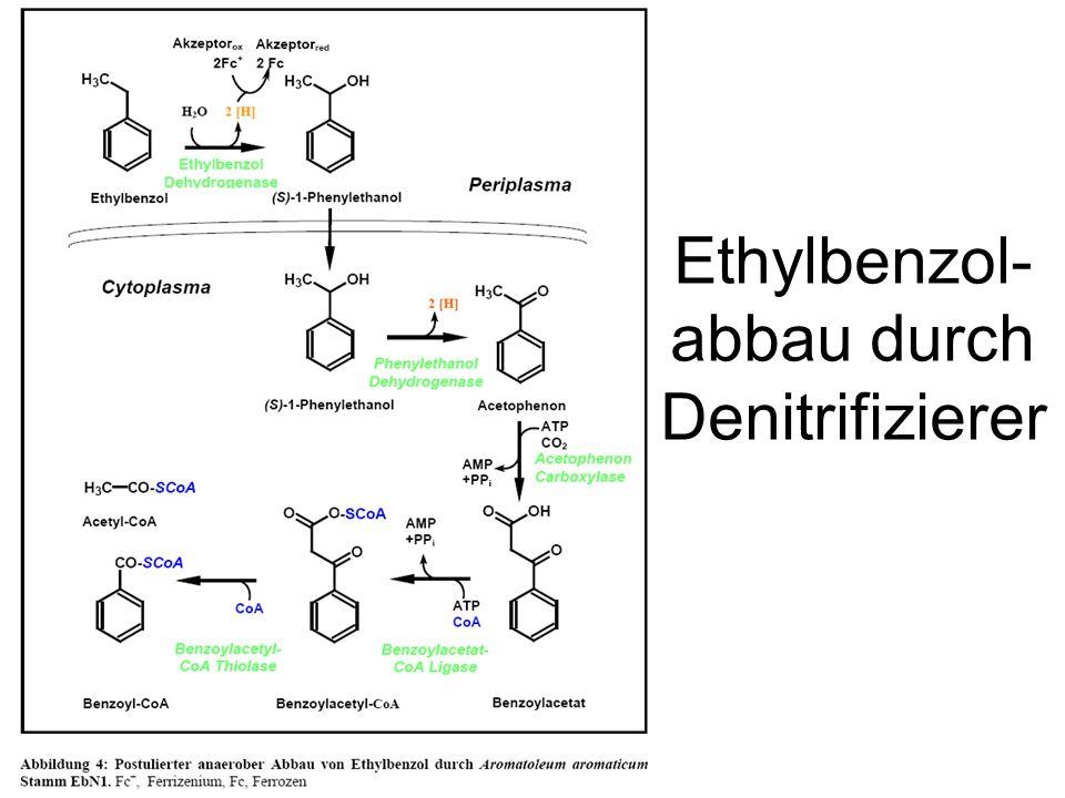 Ethylbenzol-abbau durch Denitrifizierer