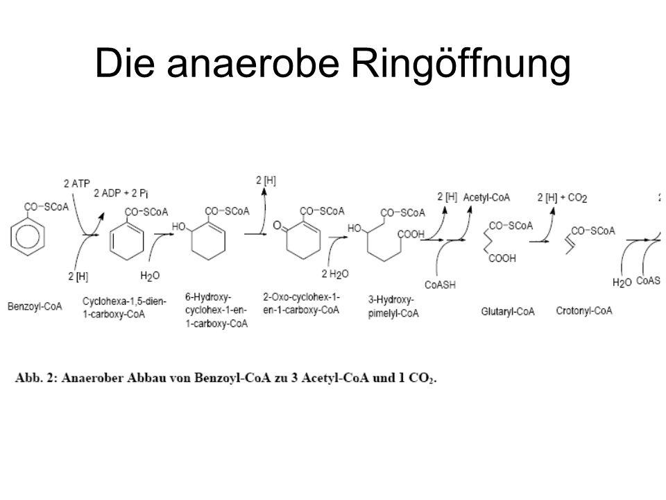 Die anaerobe Ringöffnung
