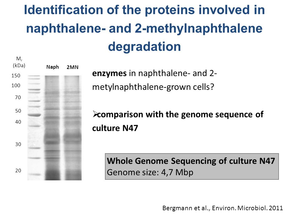 Identification of the proteins involved in naphthalene- and 2-methylnaphthalene degradation