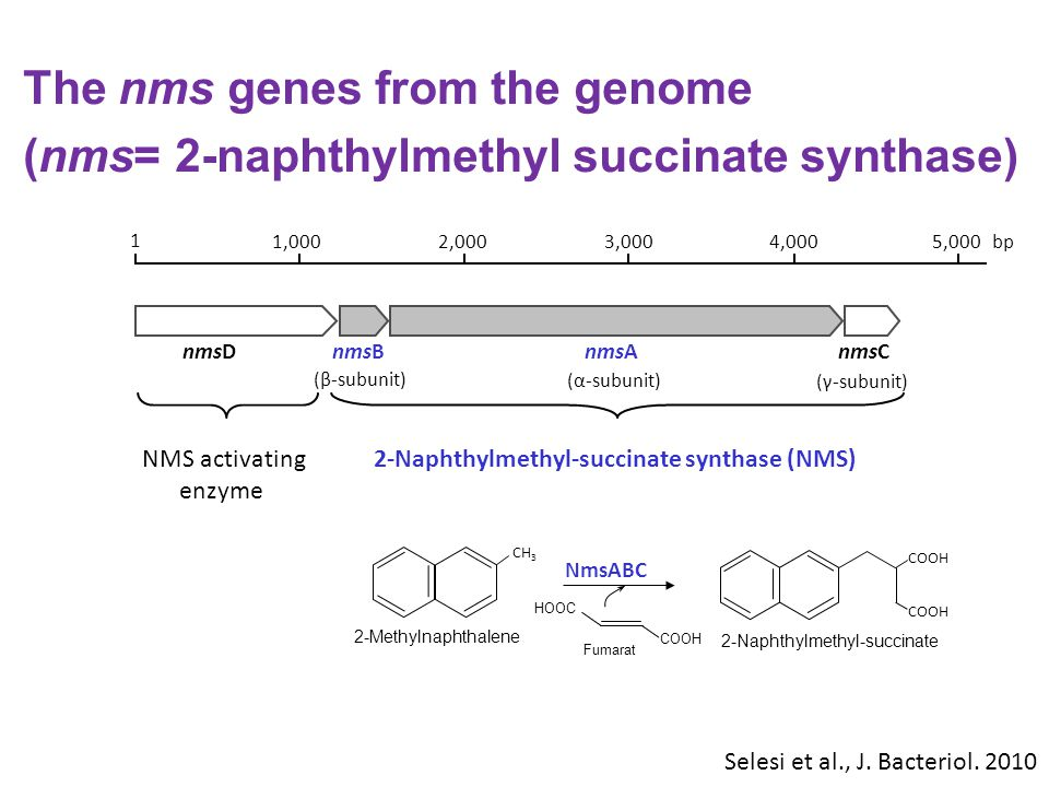 The nms genes from the genome