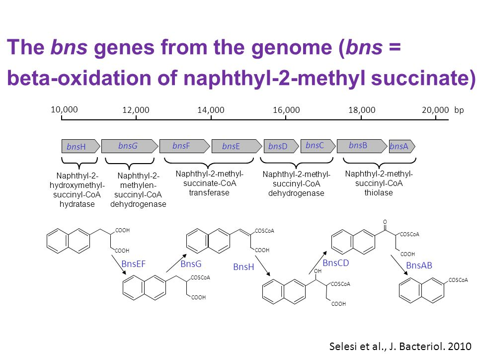 The bns genes from the genome (bns =