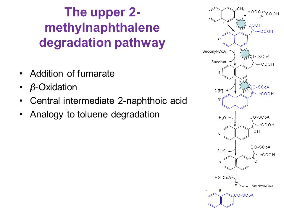 The upper 2-methylnaphthalene degradation pathway