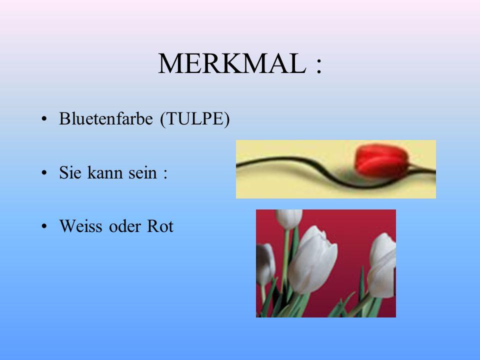 MERKMAL : Bluetenfarbe (TULPE) Sie kann sein : Weiss oder Rot
