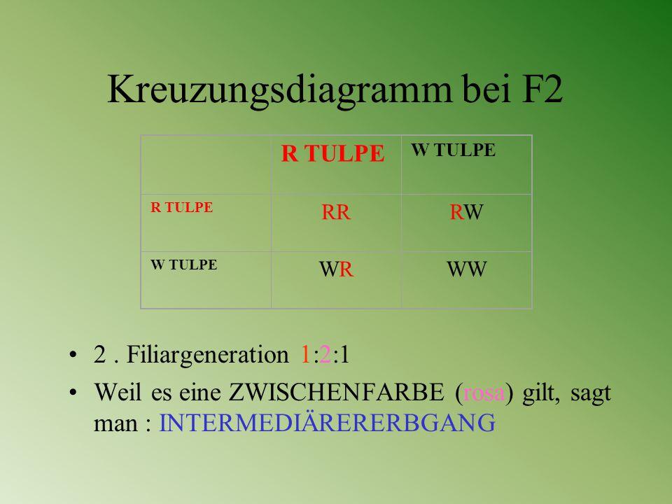 Kreuzungsdiagramm bei F2