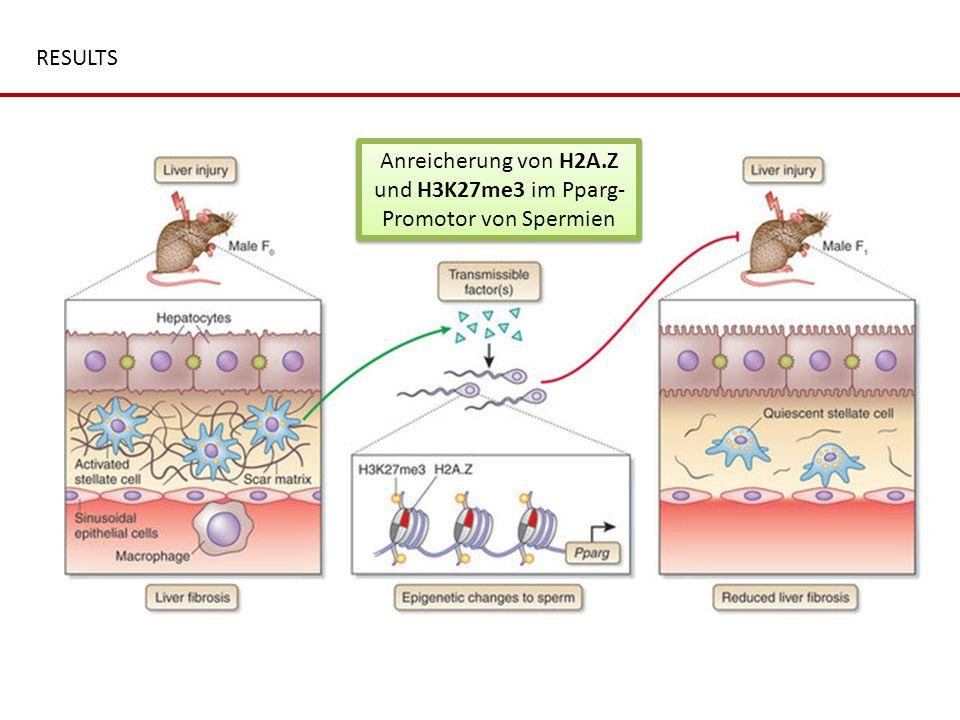 Anreicherung von H2A.Z und H3K27me3 im Pparg-Promotor von Spermien